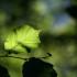 Green leaf by Mathias Erhart