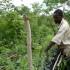 Zambia smallholder tends agroforestry plot